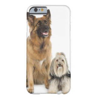 Studio portrait of Belgian shepherd and Shih Tzu Barely There iPhone 6 Case