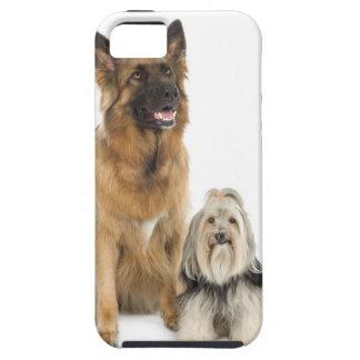 Studio portrait of Belgian shepherd and Shih Tzu Case For The iPhone 5