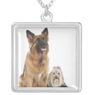 Studio portrait of Belgian shepherd and Shih Tzu Silver Plated Necklace