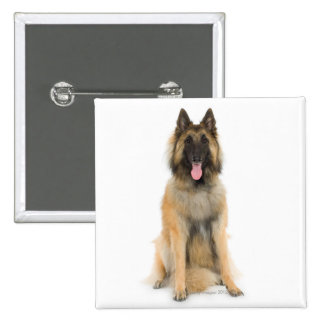 Studio portrait of Belgian shepherd dog 15 Cm Square Badge