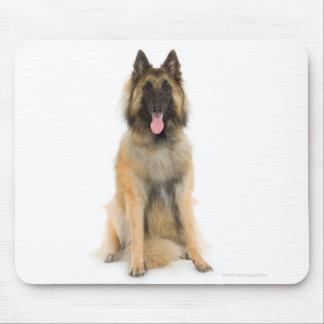 Studio portrait of Belgian shepherd dog Mouse Pad