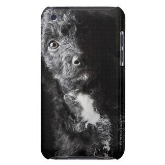 Studio portrait of black jack-a-doodle Case-Mate iPod touch case