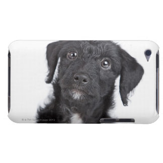 Studio portrait of black jack-a-doodle iPod Case-Mate cases