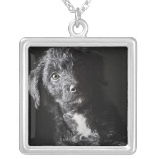 Studio portrait of black jack-a-doodle silver plated necklace