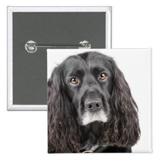 Studio portrait of cocker spaniel 15 cm square badge