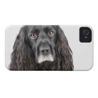Studio portrait of cocker spaniel iPhone 4 case