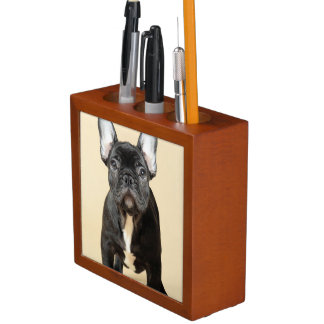 Studio portrait of French bulldog puppy standing Desk Organiser
