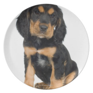 Studio portrait of Rottweiler puppy Plate
