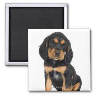 Studio portrait of Rottweiler puppy Square Magnet