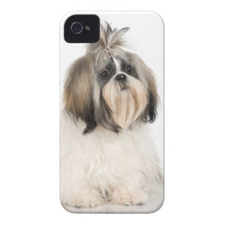 Studio portrait of Shih Tzu iPhone 4 Case