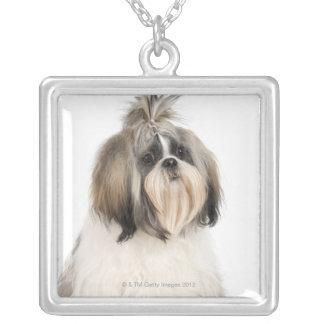Studio portrait of Shih Tzu Silver Plated Necklace