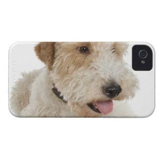 Studio portrait of Wheaten terrier puppy iPhone 4 Cases