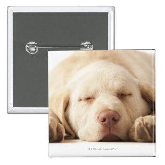 Studio portrait of Yellow Labrador Retriever 15 Cm Square Badge