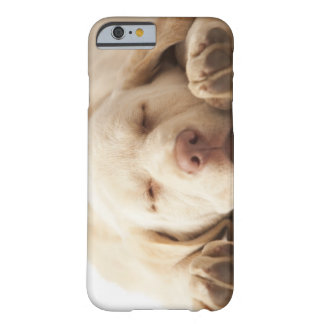 Studio portrait of Yellow Labrador Retriever Barely There iPhone 6 Case