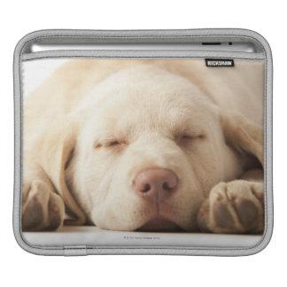 Studio portrait of Yellow Labrador Retriever iPad Sleeve