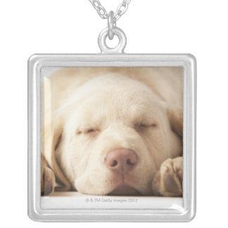 Studio portrait of Yellow Labrador Retriever Silver Plated Necklace