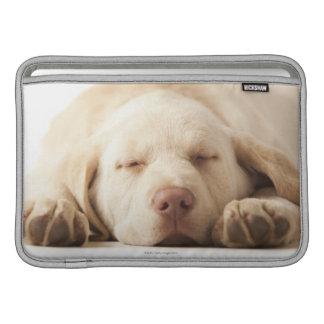 Studio portrait of Yellow Labrador Retriever Sleeve For MacBook Air