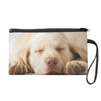 Studio portrait of Yellow Labrador Retriever Wristlet Clutches