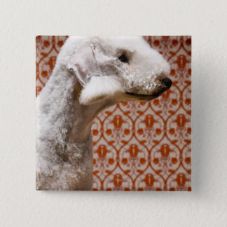 Studio shot of Bedlington Terrier 15 Cm Square Badge