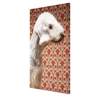 Studio shot of Bedlington Terrier Canvas Print