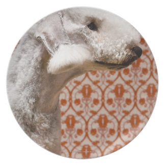 Studio shot of Bedlington Terrier Party Plate