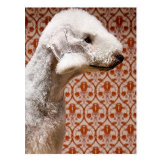 Studio shot of Bedlington Terrier Postcard