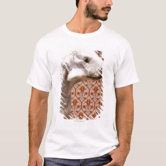 Studio shot of Bedlington Terrier T-Shirt