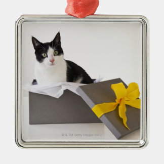 Studio shot of black and white cat in gift box christmas ornament