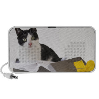 Studio shot of black and white cat in gift box travelling speakers