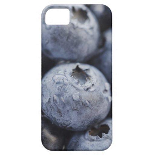 Studio shot of blueberries 2 iPhone 5 case