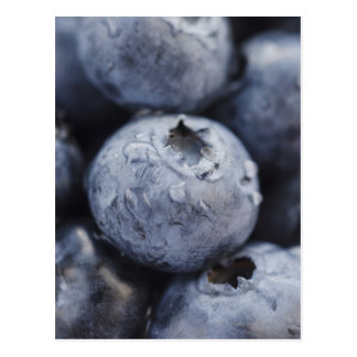 Studio shot of blueberries 2 postcard