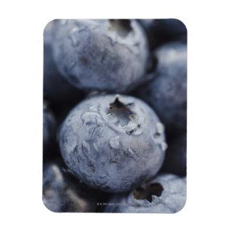 Studio shot of blueberries 2 magnet