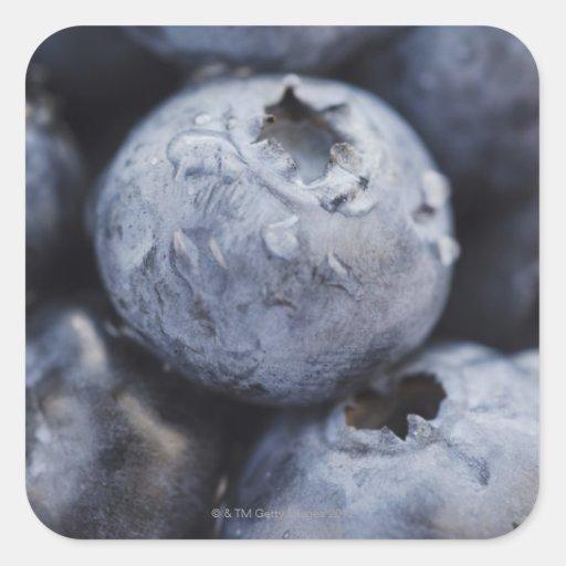 Studio shot of blueberries 2 square stickers