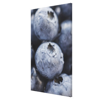 Studio shot of blueberries 2 stretched canvas print