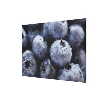 Studio shot of blueberries 3 canvas print