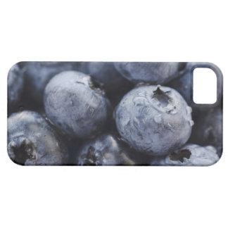 Studio shot of blueberries 3 iPhone 5 cases
