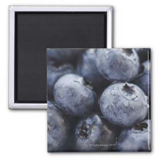 Studio shot of blueberries 3 refrigerator magnets