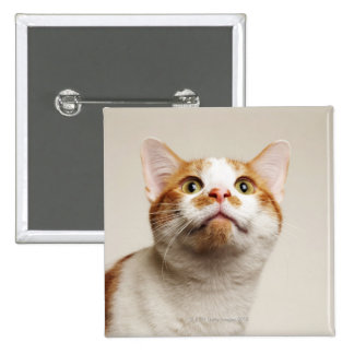 Studio shot of cat looking up 15 cm square badge