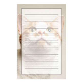 Studio shot of cat looking up stationery