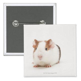 Studio shot of Guinea Pig 15 Cm Square Badge