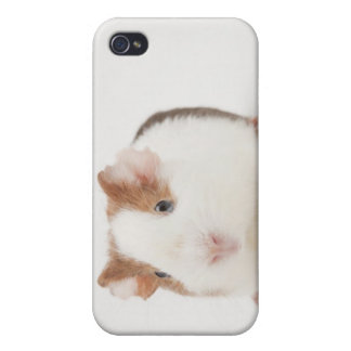 Studio shot of Guinea Pig iPhone 4 Case