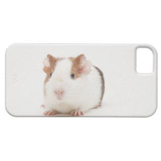 Studio shot of Guinea Pig iPhone 5 Cover