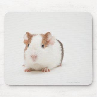 Studio shot of Guinea Pig Mouse Mat