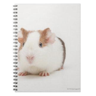 Studio shot of Guinea Pig Notebook