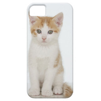 Studio shot of kitten barely there iPhone 5 case
