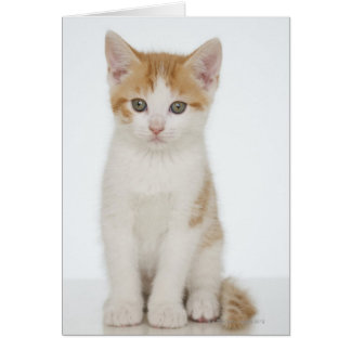 Studio shot of kitten card
