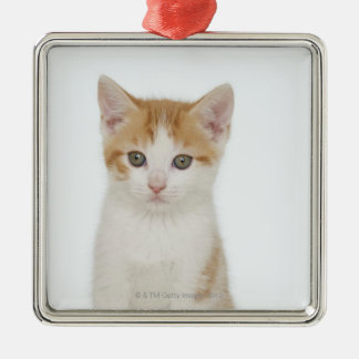 Studio shot of kitten christmas ornament