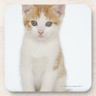 Studio shot of kitten coaster
