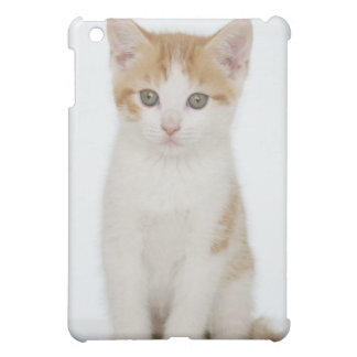 Studio shot of kitten iPad mini case