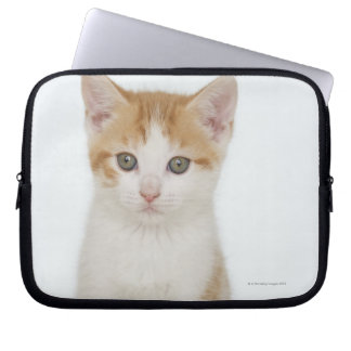 Studio shot of kitten laptop sleeve
